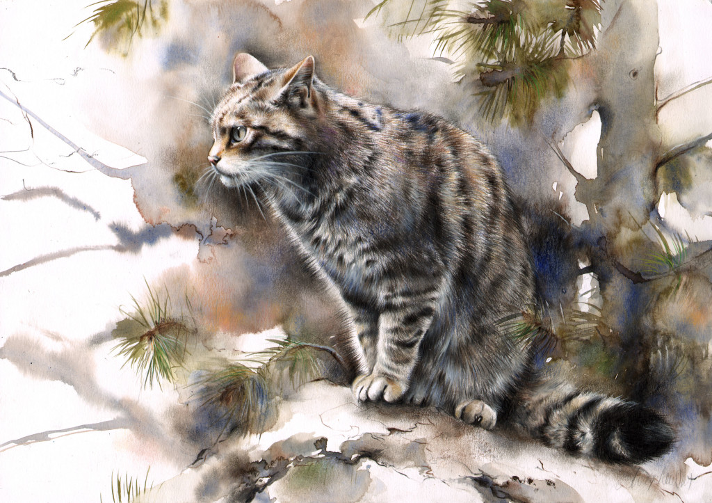 scottishwildcat