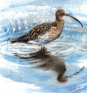 curlew1