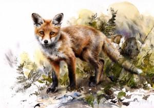 foxcub.