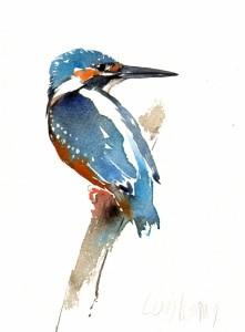 kingfishercrop