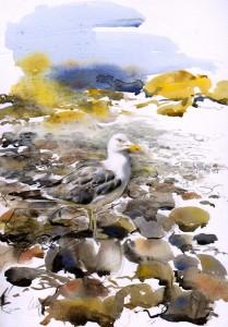 lucynewtongull