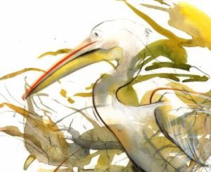 pelicanportrait
