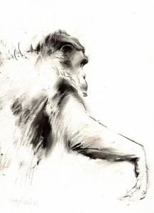 zchimpanzee